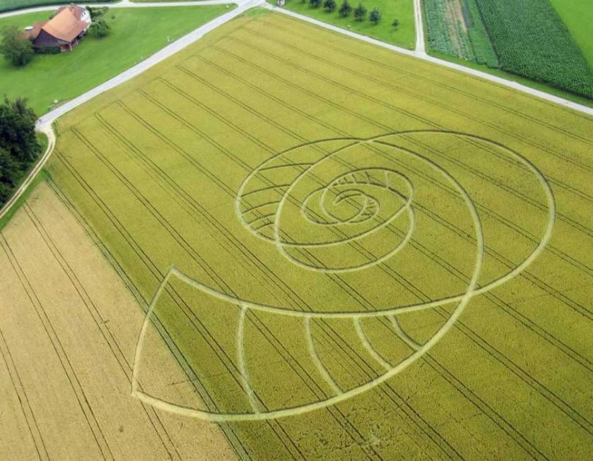 crop circle Hörhausen 2009